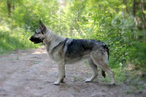 храбрая волчица