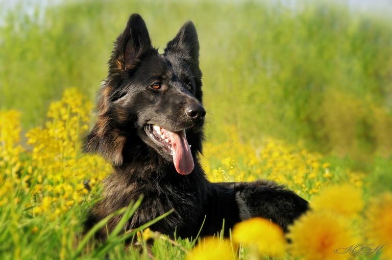 фотограф для собак