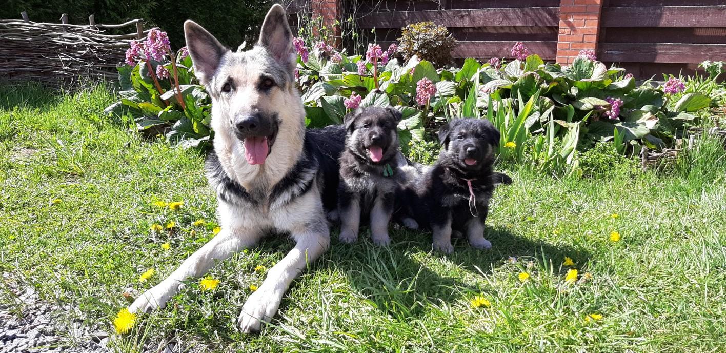 Собаки и щенки в питомнике СПб