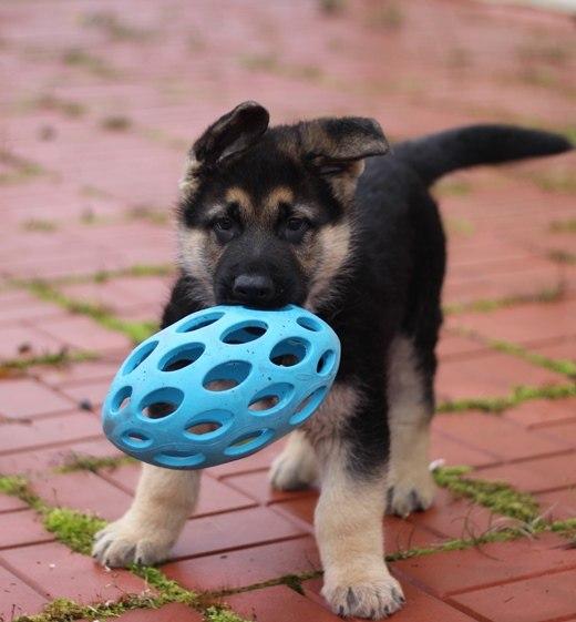 игры со щенком